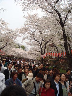 ... und unglaublich viele Japaner!