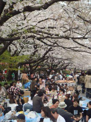 Picknick unter Kirschbäumen